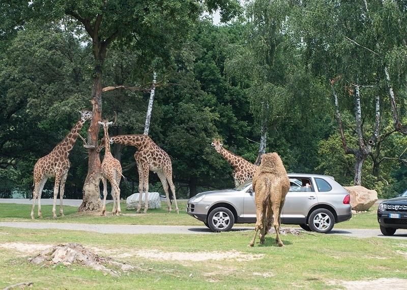 Lagomaggiore_kinderen-safari-pombia.jpg