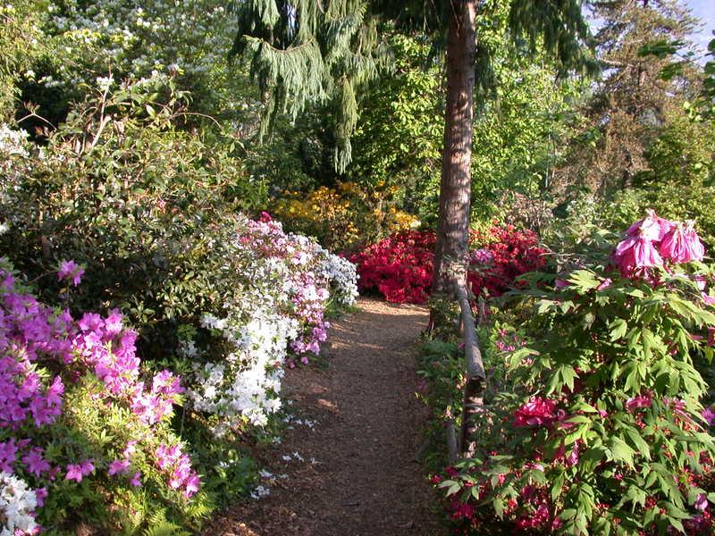 botanische tuin gambarogno
