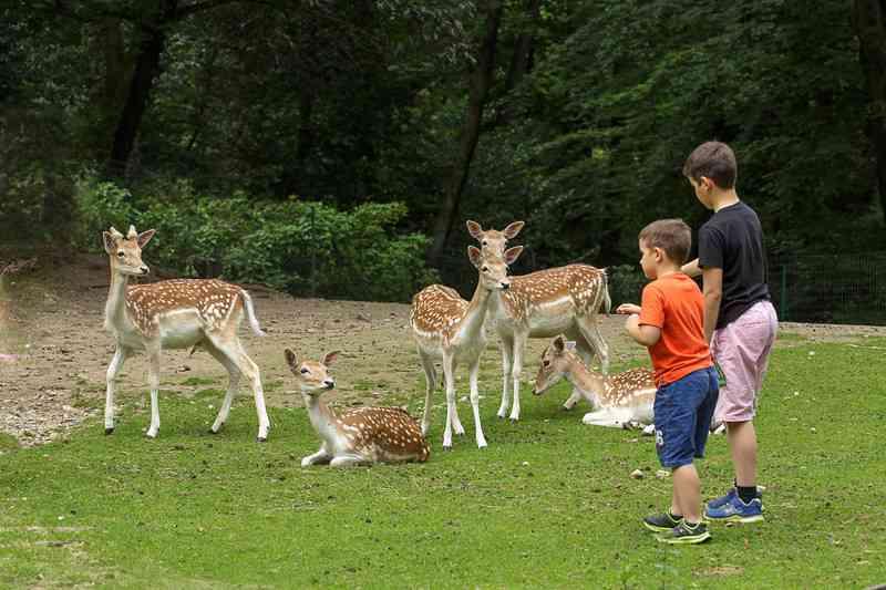 Het park en de dierentuin van Villa Pallavicino